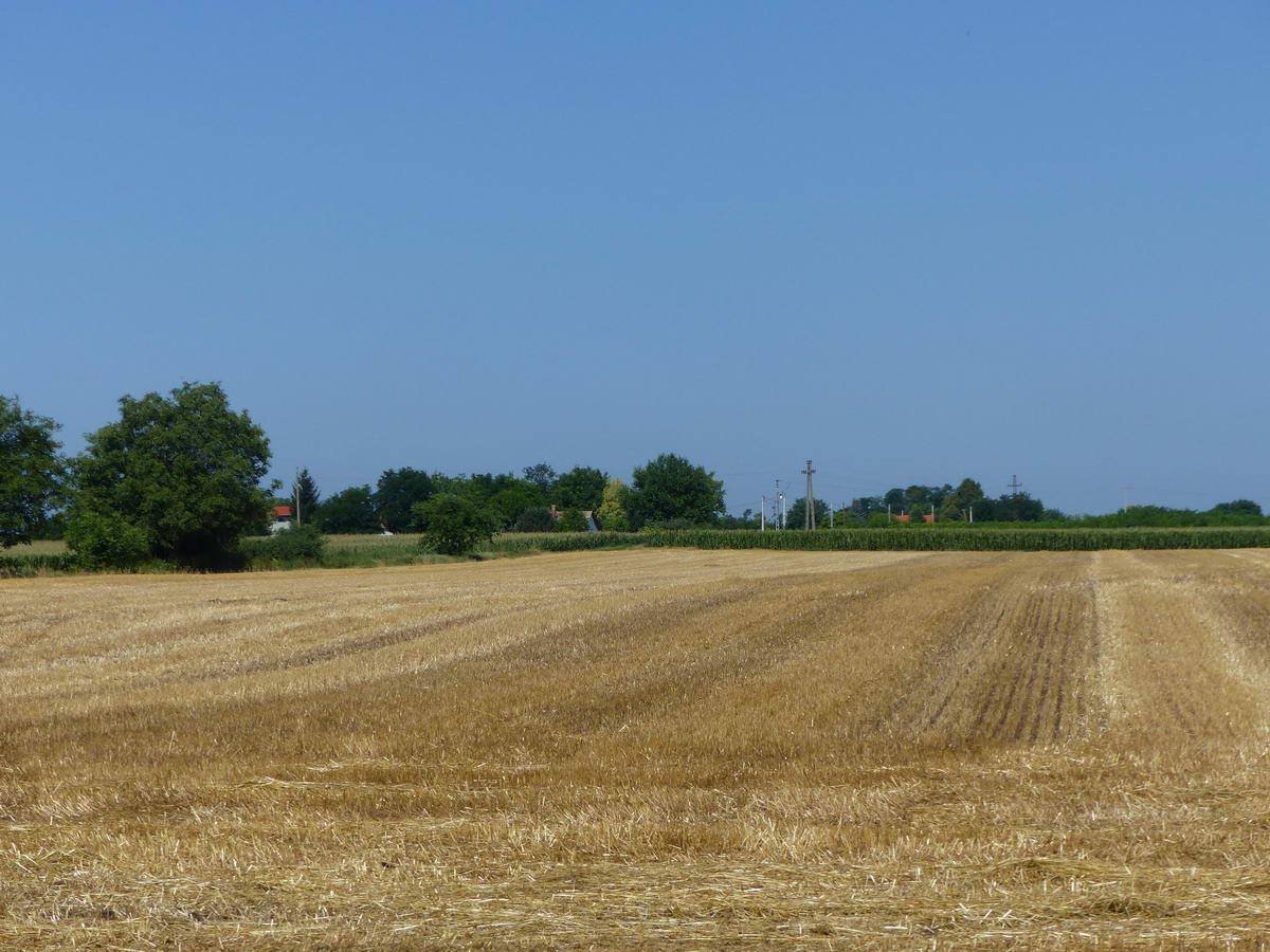 Learatott búzaföld tanyával az út mellett