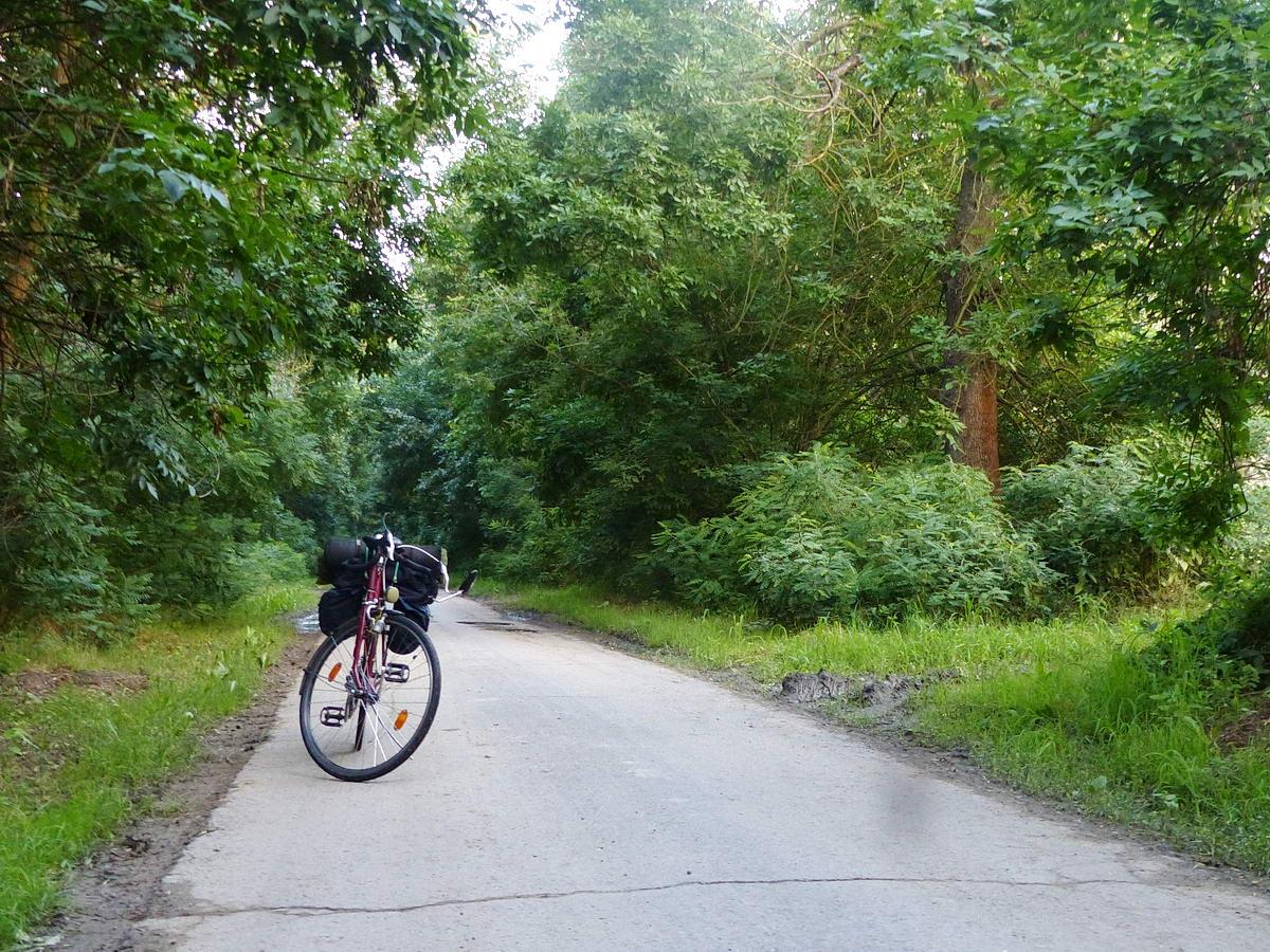 Kitoltam a bringát az erdőből a kompot Nagyrévvel összekötő keskeny aszfaltútra