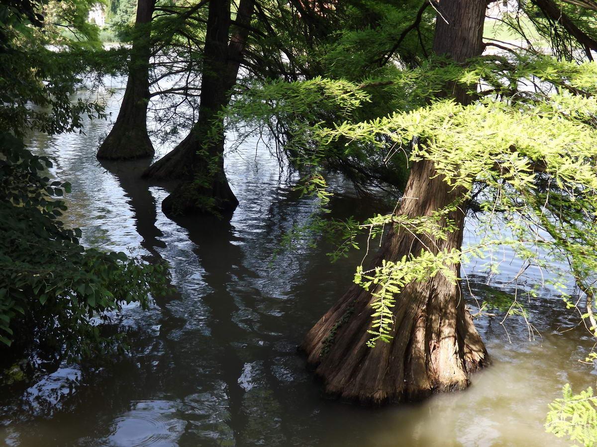 Egy másik kép a vízben álló fatörzsekről