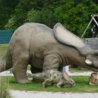 Dinoszauruszok a Balaton-felvidéken