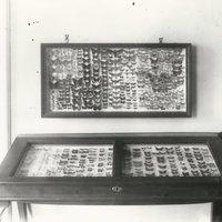 A Balatoni Múzeum lepkegyűjteménye