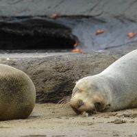 Az életben maradás a cél Galápagoson