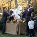 Bizarr elnöki kegyelem a pulykáknak