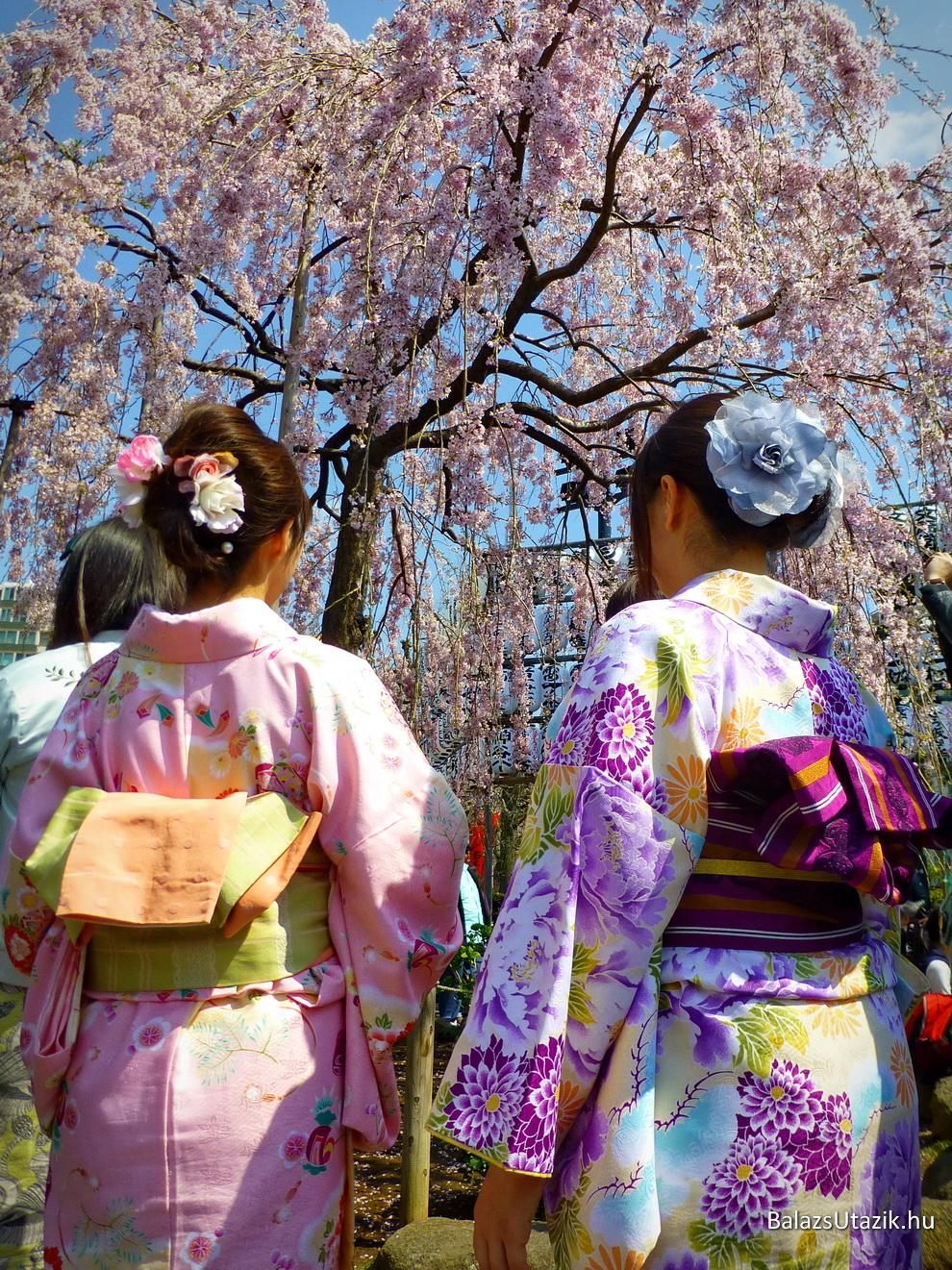 Klimaxon a tokiói cseresznyefák