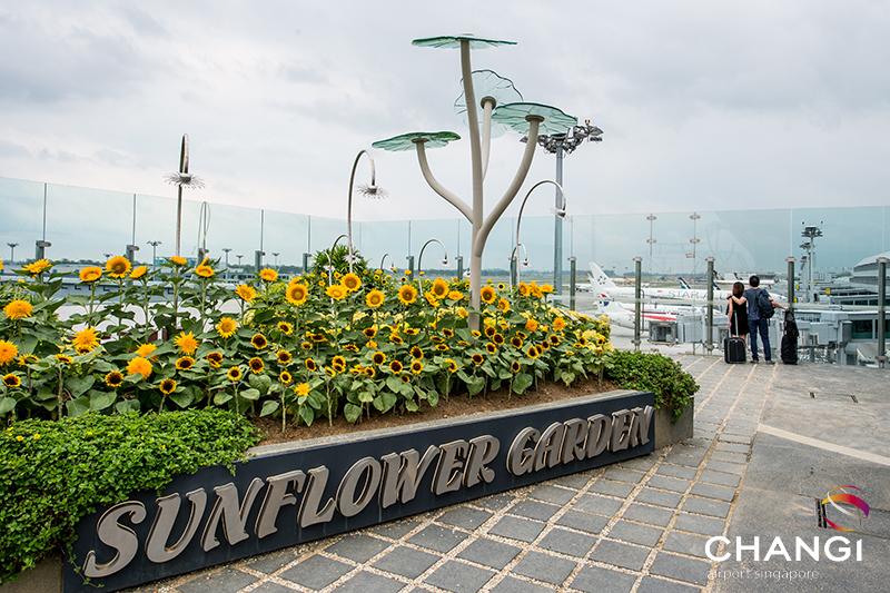 terminal_2_transit_sunflower_garden.jpg
