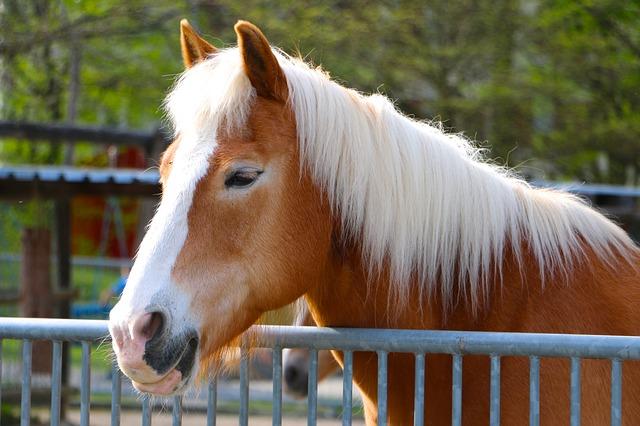gyönyörű lovas idézetek A legszebb lovas idézetek   Balerina Galeri