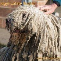 Naphegyi Lafaty Bojtor
