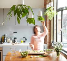 Függőkert a konyhában