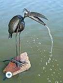 Vízköpő madár