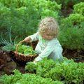 10 mérgező növény: ezekkel vigyázz, ha kisgyerek van a családban