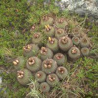 Megvan a kaktusz kiállítás jegyeiért folyó játék eredménye