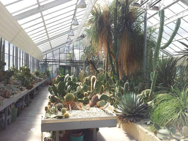 Kaktusz kiállítás csodás fotókon