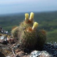 Nyerj páros belépőt a kaktusz kiállításra!