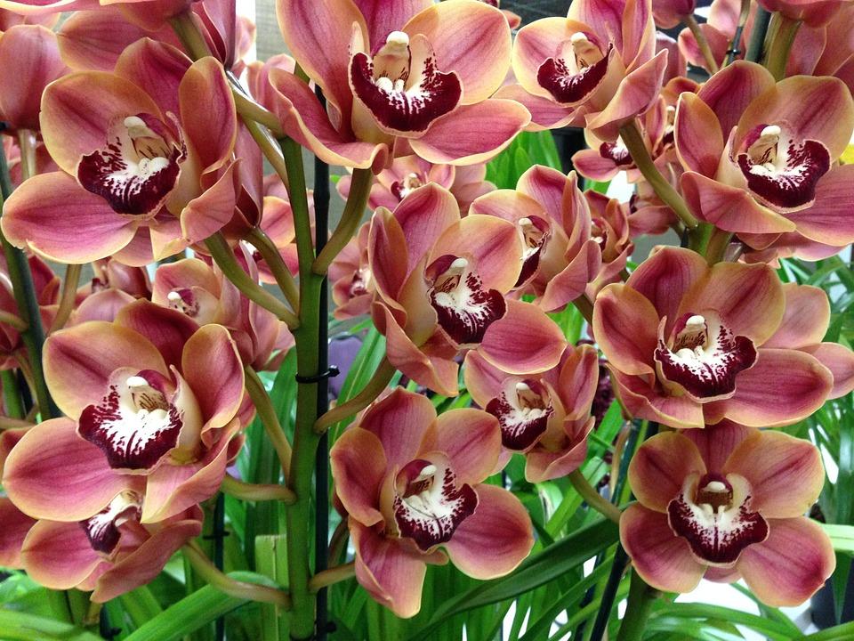 orchids-540137_960_720.jpg