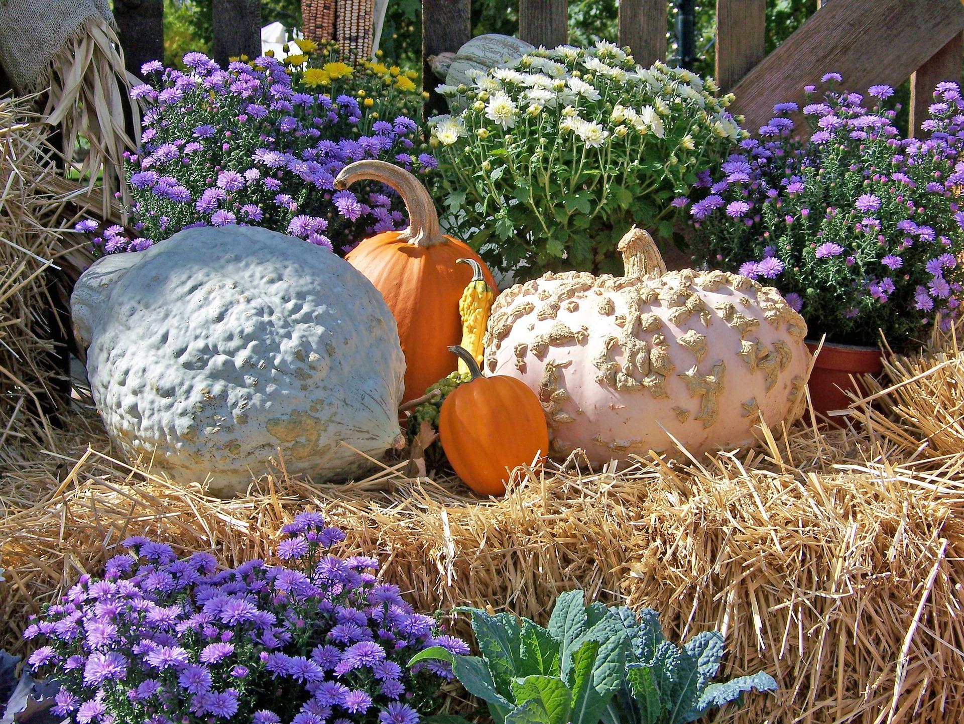 pumpkins-19754_1920.jpg