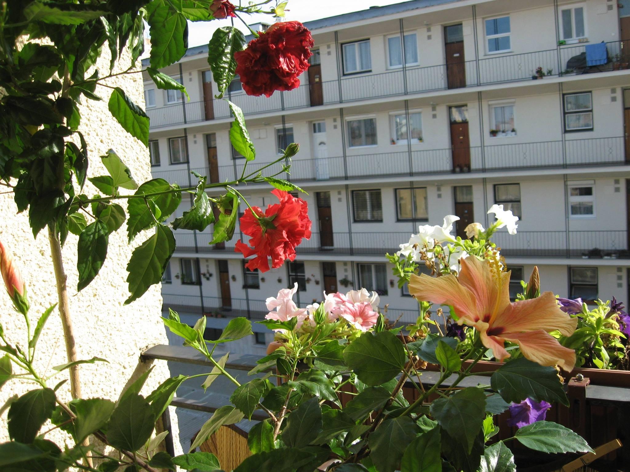 10 hiba, amit kezdő balkonkertészként elkövethetsz