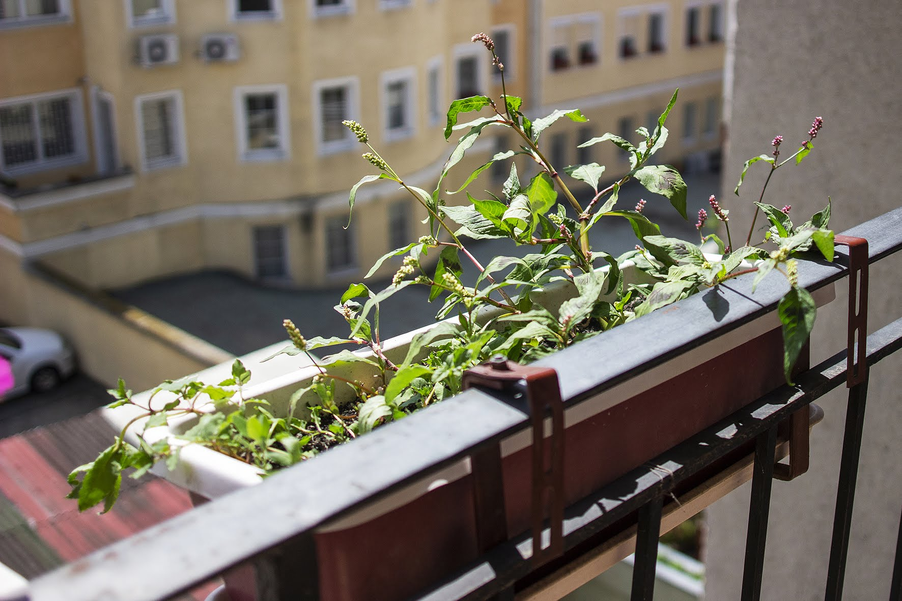balkonfanatik_rozgonyizsofiaphoto_david1266.jpg