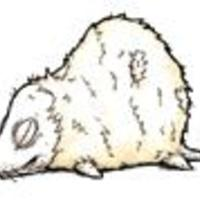 Kedves halott egereim