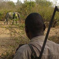 A veszelyes elefantok kozeleben