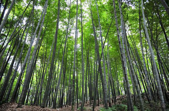 bambusztalca18.jpg