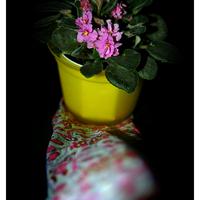 Kendő és virág