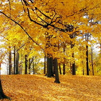 Csodás október