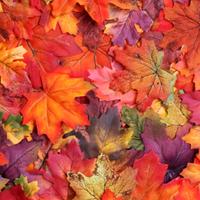 Borongós ősz