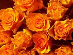 rózsák.jpg