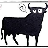 Győrben is élnek bikák