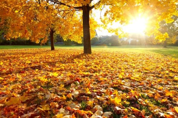 Herbst590.jpg