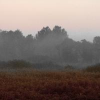 Egy kép: Párás láprét-part