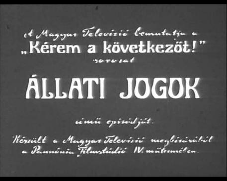 dr_bubo_allati_jogok_focimkep_ff_457366_bbjnckblghzvrz_.jpg
