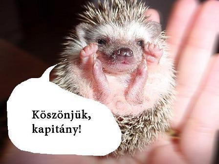 sun_koszonjukkapitany_kk_vrz_.JPG