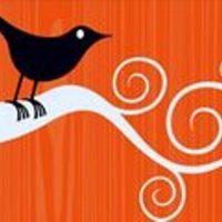 Novellát írni, madarat fogni