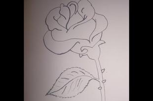 Rózsa rajzolása egyszerűen