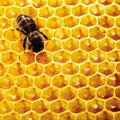 Tudod, hogy mi mindenre jó a méz?