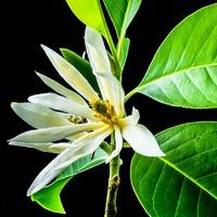 Kell-e nekünk a bioparfüm?