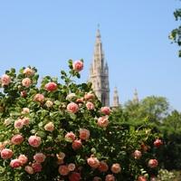 Illatos rózsakert Bécs szívében