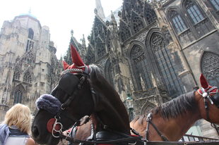 Jó dolguk és sok joguk lesz a lovaknak Bécsben