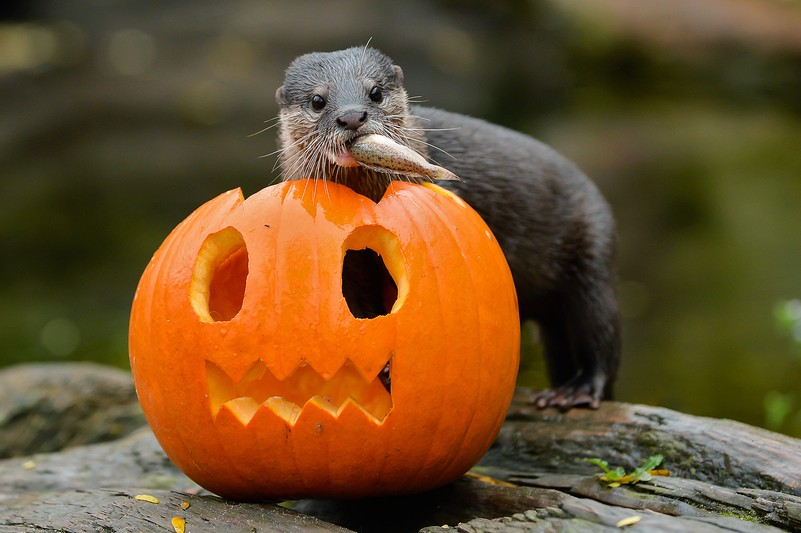 pa_halloween_zwergotter_animal_detail_801.jpg