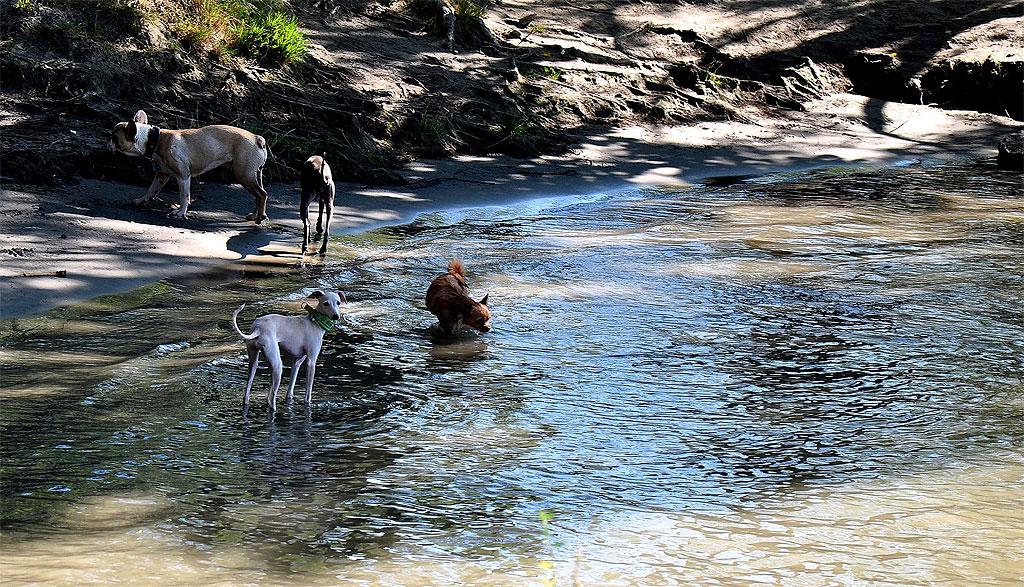 hundestraende-wien-hunde-baden.jpg