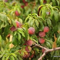 málna-őszibarack lekvár