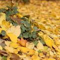 őszi képek otthonról