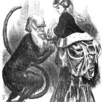 Hülye Darwin