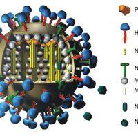 Influenza - a gyorsreagálású hadtest