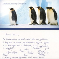 Pingvin karácsonyra, i-gotU