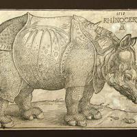 Rinocérosz Egerben