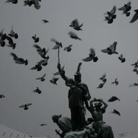 Útmutatás galamboknak