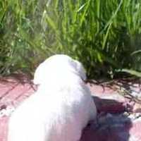 Dilly a fűben
