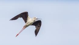 Az agresszív gólyatöcsök